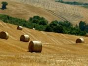3304238_3300001_agricoltura.jpg