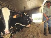 mucche_allevatori.jpg