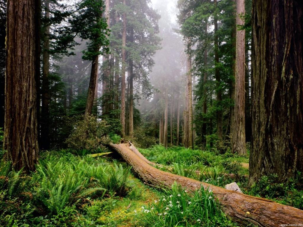 Stipendi in ritardo per i forestali, è protesta