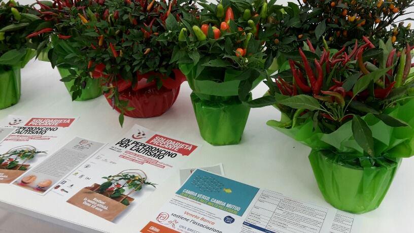 'Solidarietà piccante', piante di peperoncino per combattere l'autismo