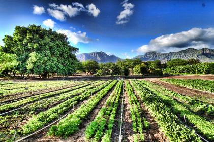 Agricoltura biologica, focus domani a Larino