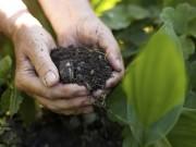 adotta-una-zolla-progetto-per-sostenere-agricoltura-biologica-1.jpg