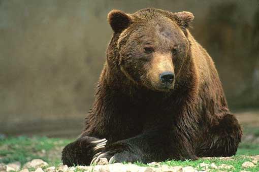 A Pizzone giovedì l'inaugurazione del nuovo museo dell'orso marsicano
