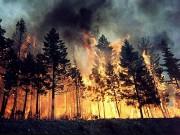 bosco-in-fiamme.jpg