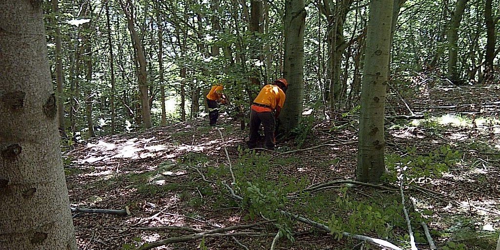 Lavoratori forestali verso un nuovo presidio