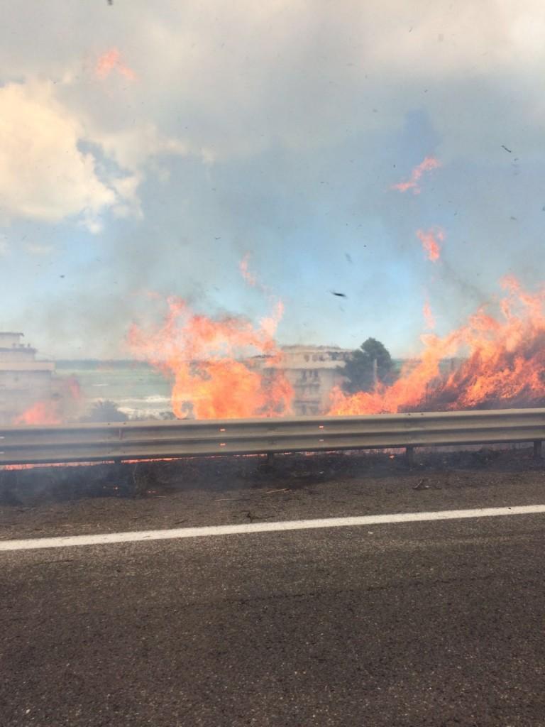 Termoli, incendio di sterpaglie lungo la Statale 16