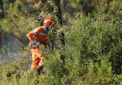 Lavoratori forestali non pagati, il sindacato chiede un incontro urgente alla Regione