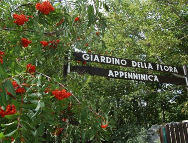 giardino-flora-appenninica-capracotta.jpg