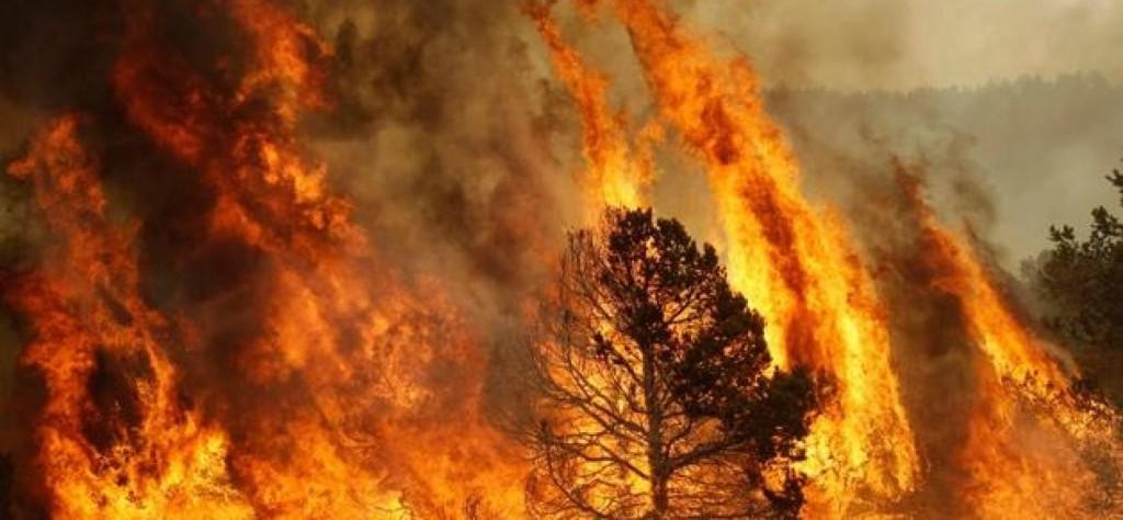 Causa un incendio nel bosco, denunciato 50enne
