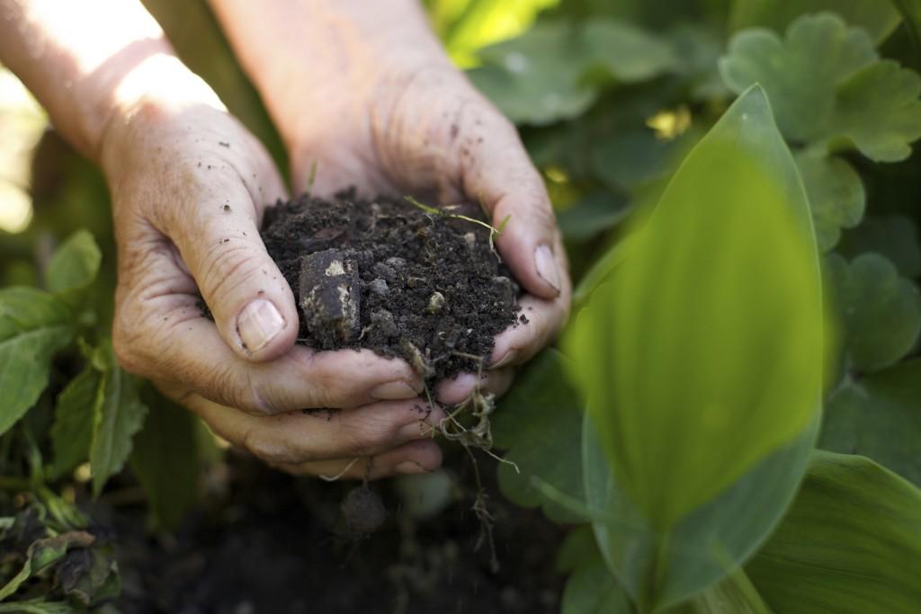 Aumento 14esima per pensionati coltivatori diretti, il plauso di Coldiretti Molise