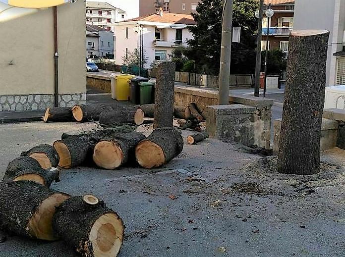 Alberi tagliati in città, arrivano i carabinieri