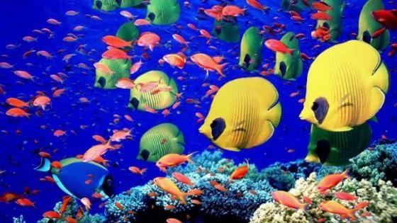 Sequestrato carico con tonnellate di pesci tropicali diretto a Campobasso