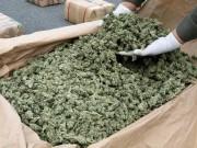 marijuana-27.jpeg