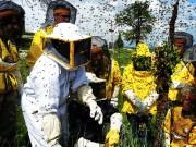 3.copertina-corso-apicoltura.jpg