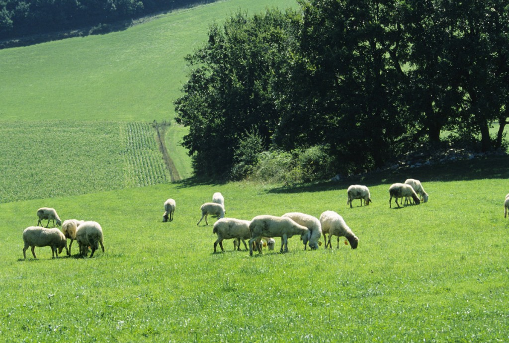 Utilizzo dei terreni agricoli, come presentare domanda