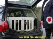 cani-carabinieri.jpg