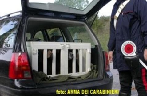 Rubavano i cani e chiedevano il riscatto, beccati dai Carabinieri e denunciati per estorsione