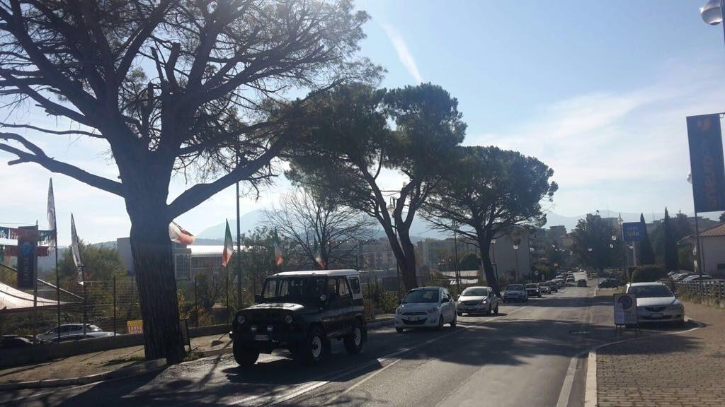Taglio dei pini secolari ad Isernia. Esplode la rabbia in città