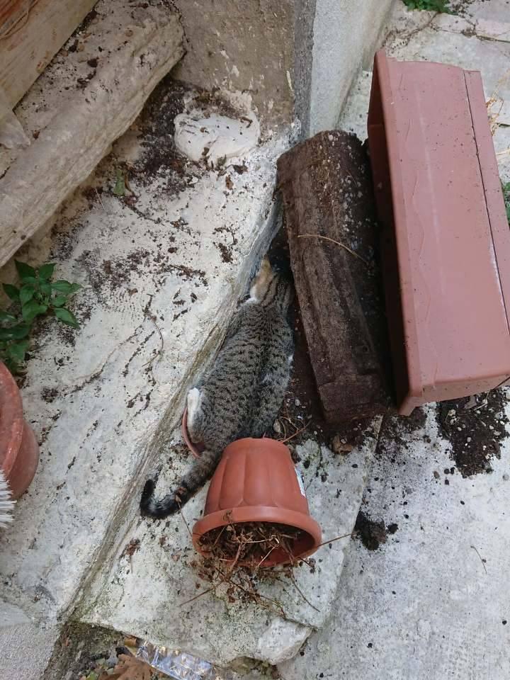 Strage di gatti nel centro storico di Campobasso: sono stati avvelenati. Appello su Fb al sindaco