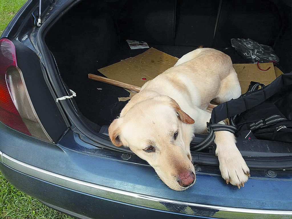 Ritrovato uno dei sei cani spariti a Venafro: forse era stato rubato