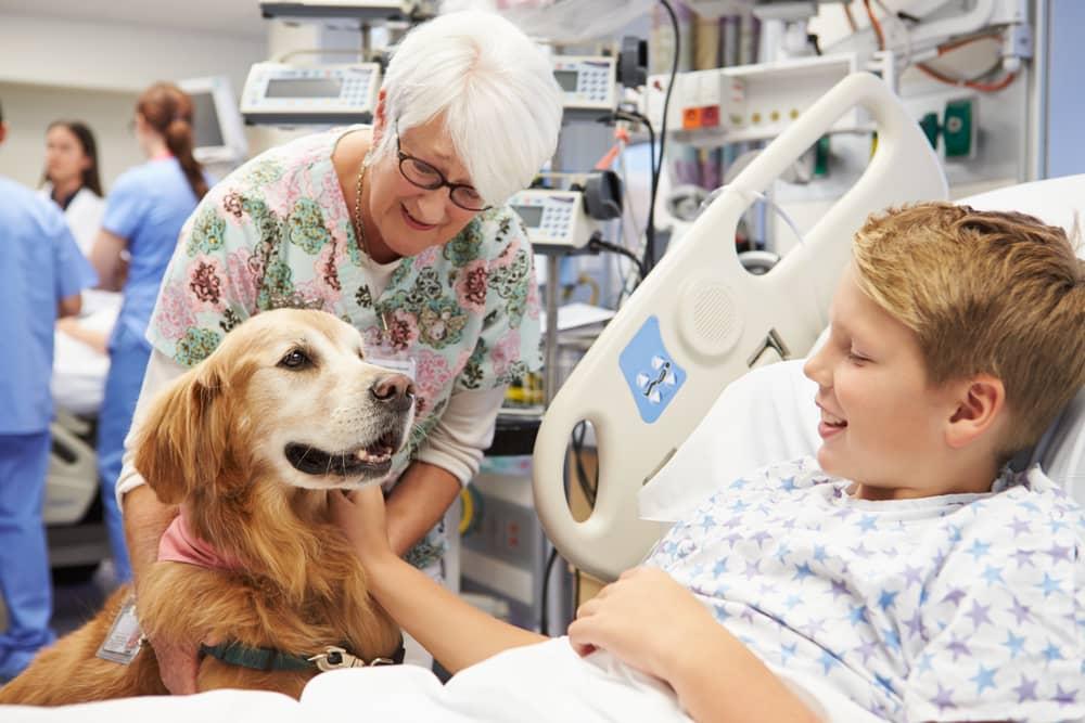 Cani, gatti e conigli in visita ai padroni negli ospedali: c'è il decreto del commissario