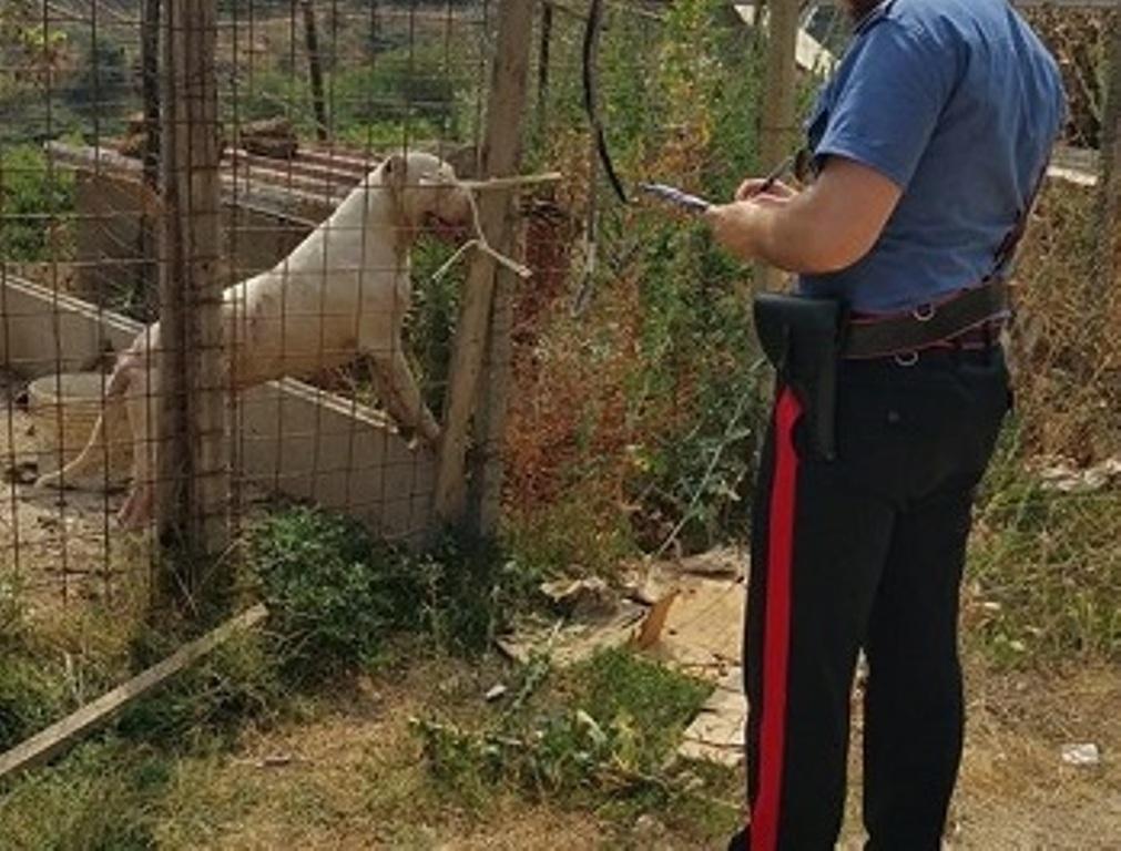 Isernia, cani maltrattati trovati e salvati dai carabinieri: denunciato il proprietario