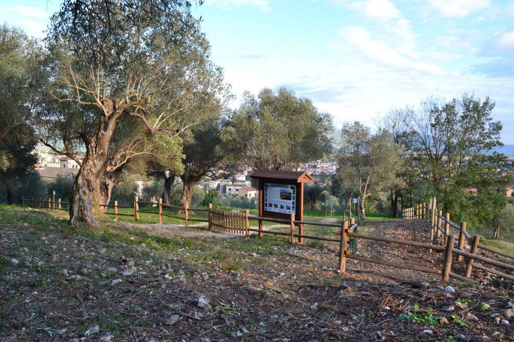 Venafro, Parco dell'Olivo a rischio: Città Nuova tuona contro la Regione